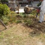 葛飾区のお寺にて植木の処分をしました