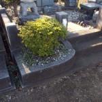 八柱霊園のお墓の植木を抜きました
